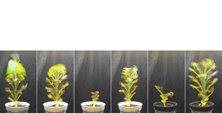 001_bio-hybrid-controlled-plant-growth