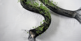 004_cress-growth-in-braid